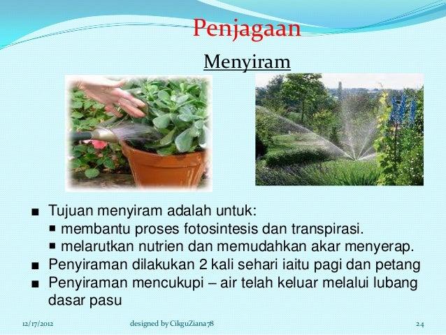 Penjagaan                                    Menyiram  ■ Tujuan menyiram adalah untuk:     membantu proses fotosintesis d...