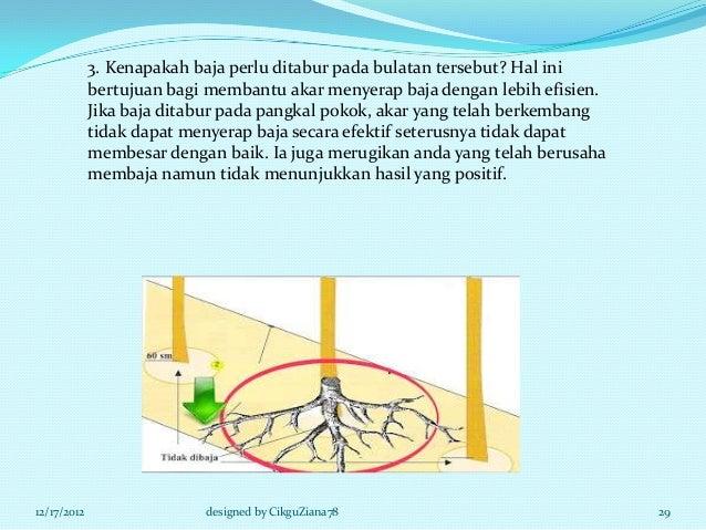 3. Kenapakah baja perlu ditabur pada bulatan tersebut? Hal ini             bertujuan bagi membantu akar menyerap baja deng...