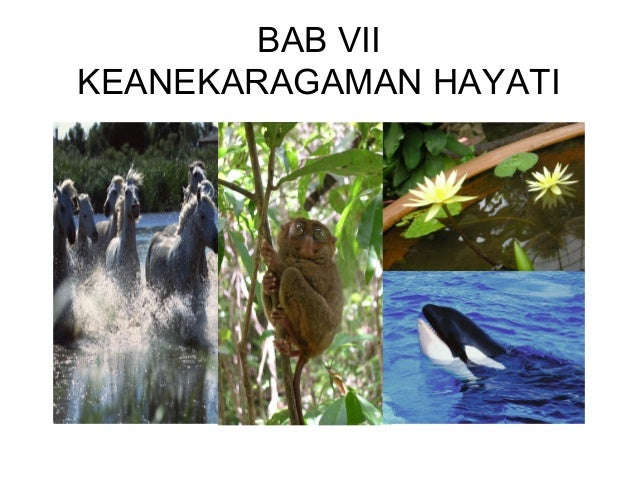 BAB VII KEANEKARAGAMAN HAYATI