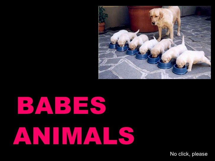 BABES ANIMALS No click, please