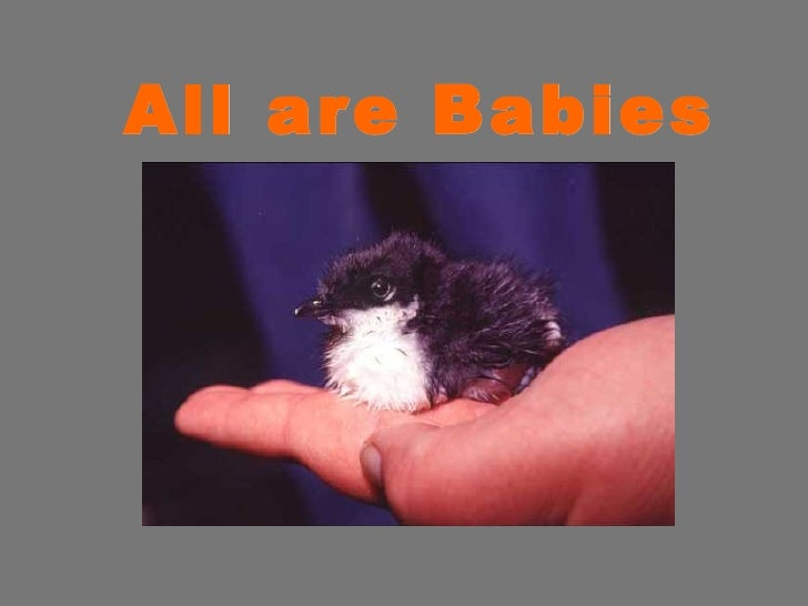 All are Babies