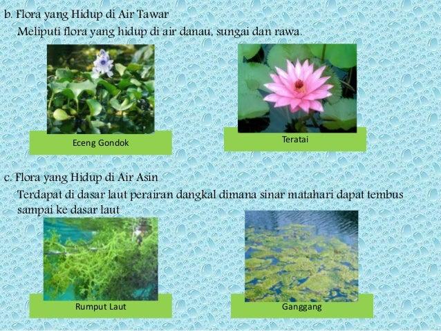 860 Gambar Flora Di Wilayah Oriental Gratis Terbaik