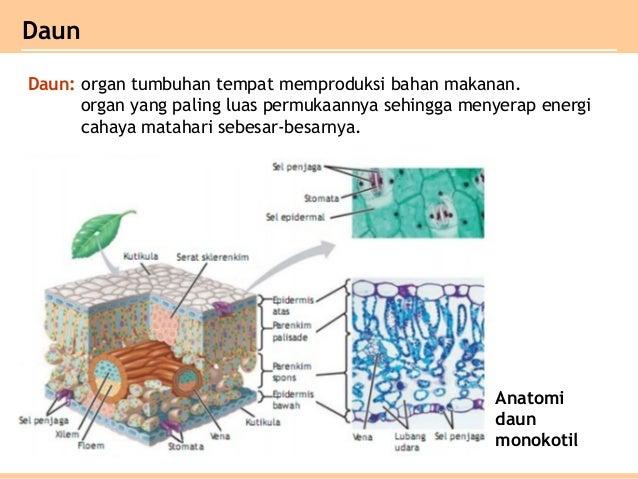 Bab jaringan tumbuhan