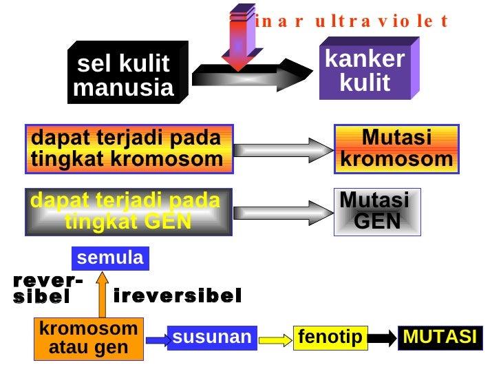 Bab mutasi 4 sel kulit ccuart Choice Image