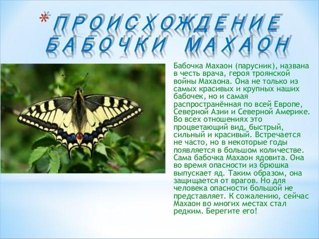 Описание бабочки махаон