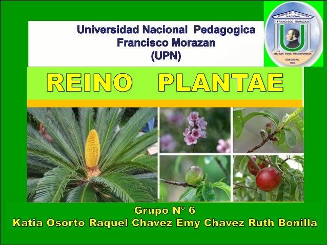 Reino plantae - Informacion sobre la fibra vegetal ...