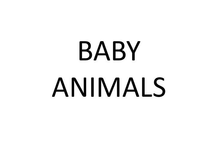 BABY ANIMALS<br />