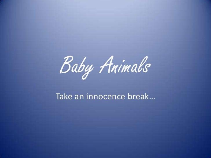 Baby AnimalsTake an innocence break…