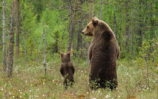 Baby Love -Wildlife