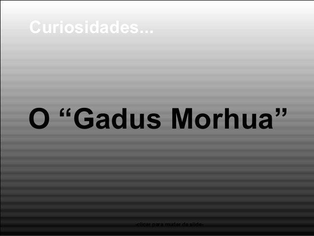 """O """"Gadus Morhua"""" -clicar para mudar de slide- Curiosidades..."""