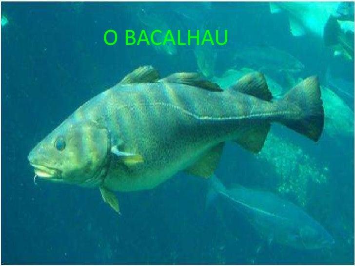 O BACALHAU