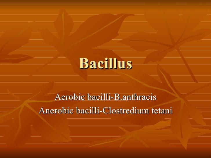Bacillus Aerobic bacilli-B.anthracis Anerobic bacilli-Clostredium tetani