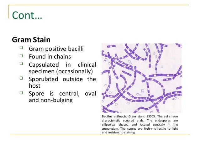 Bacillus And Corynebacterium