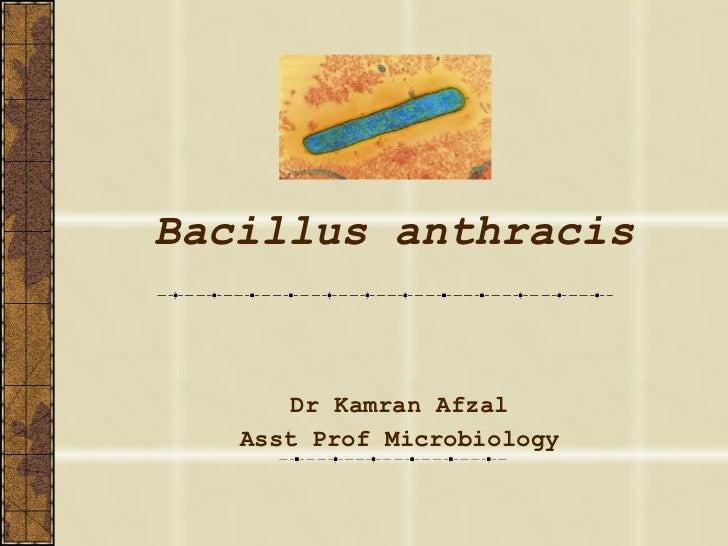 Bacillus anthracis Dr Kamran Afzal Asst Prof Microbiology