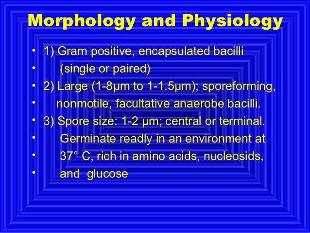 Morphology and Physiology• 1) Gram positive, encapsulated bacilli•     (single or paired)• 2) Large (1-8μm to 1-1.5μm); sp...