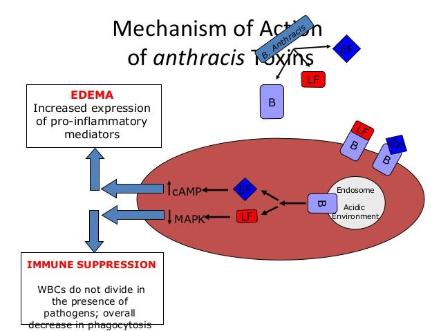 Bacillus Anthracis Toxins