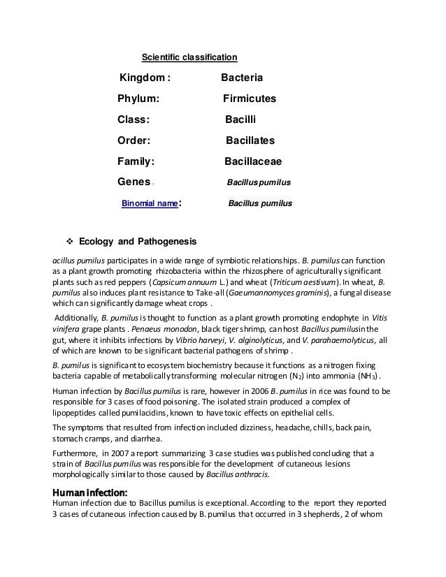 Scientific classification Kingdom : Bacteria Phylum: Firmicutes Class: Bacilli Order: Bacillates Family: Bacillaceae Genes...