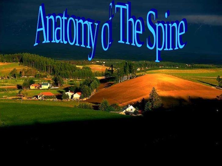 4 Anatomy of The Spine