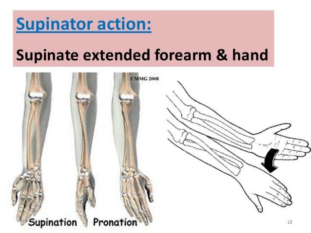 Back forearm