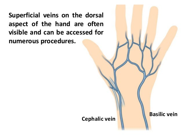 Dorsum Of Hand Demirediffusion