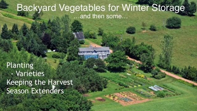 Backyard vegetables for winter storage Slide 2