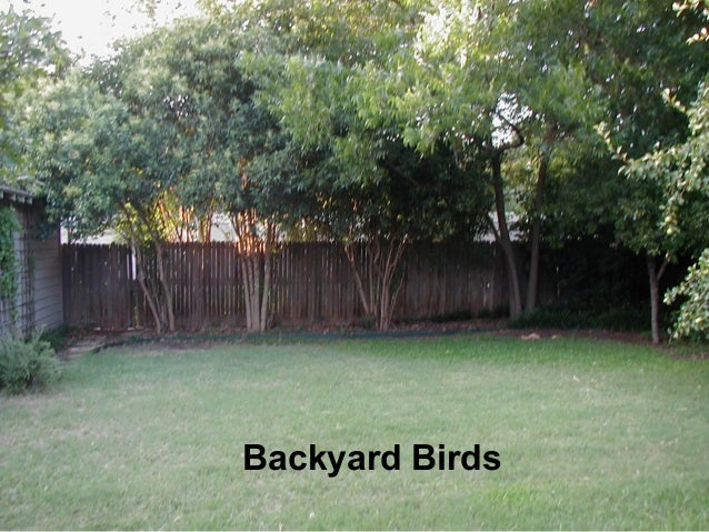 Backyard Birds Backyard Birds