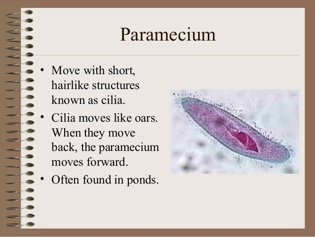 by what means does paramecium move