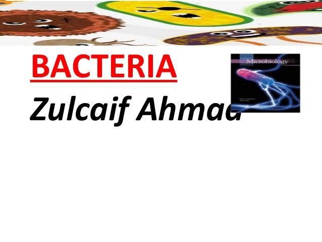 BACTERIAZulcaif Ahmad