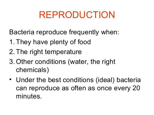 How Do Autotrophic Bacteria Make Food
