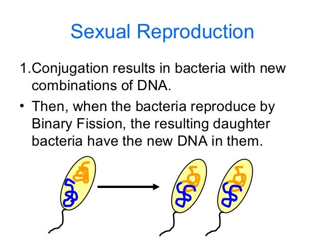 How bacteria reproduce sexually