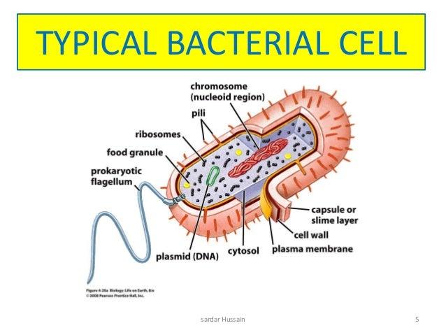 bacteria 5 638