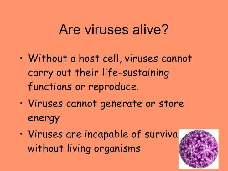 Bacteria And Virus Notes