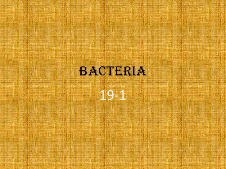 Bacteria<br />19-1<br />