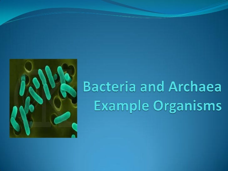 the three domains of organisms are based mainly on