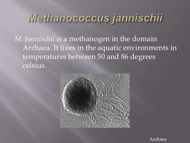 Bacteria And Archaea Examples