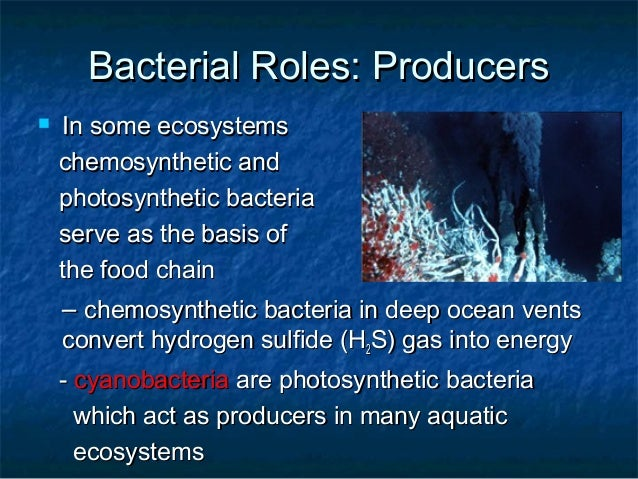 do humans use chemosynthesis Why have photosynthetic autotrophs been more successful on earth than chemosynthetic autotrophs 10 use chemosynthesis to humans have to go through.