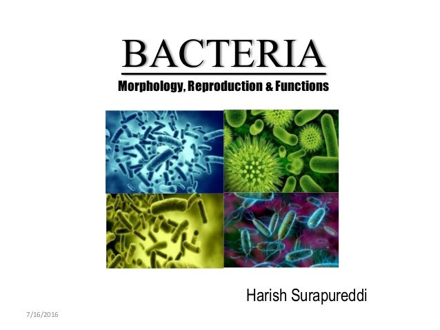 BACTERIA Morphology, Reproduction & Functions Harish Surapureddi 7/16/2016