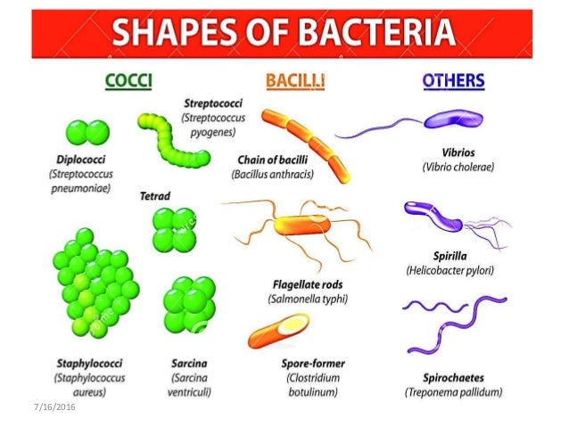bacteria morphology reproduction and functions