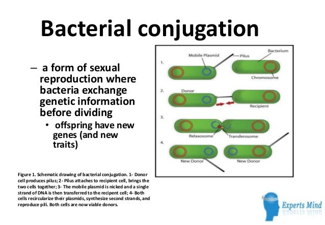Form of sexual reproduction in bacteria