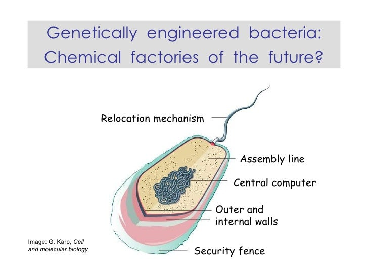 Genetically engineered bacteria: chemical factories of the future?