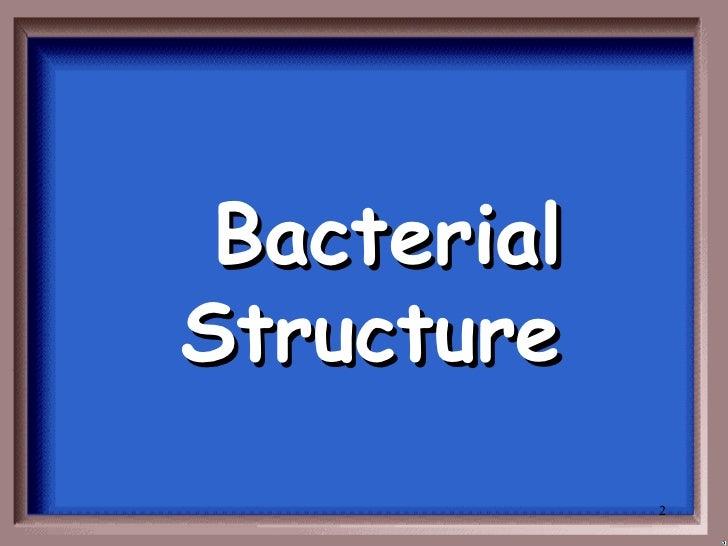 Bacteria jeopardy Slide 2