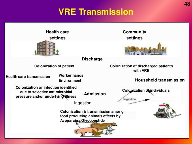 Vre Infection
