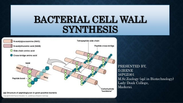 Bacterial cell wall assembly: still an attractive antibacterial.