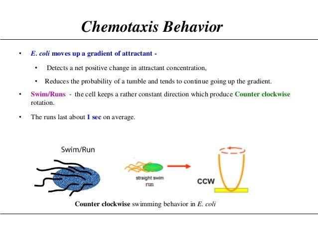 BACTERIAL CHEMOTAXIS EBOOK