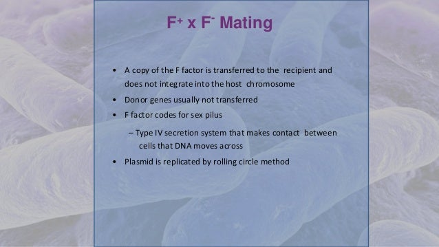 F+ x F- Mating • A copy of the F factor is transferred to the recipient and does not integrate into the host chromosome • ...