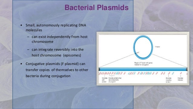 Bacterial Plasmids • Small, autonomously replicating DNA molecules – can exist independently from host chromosome – can in...