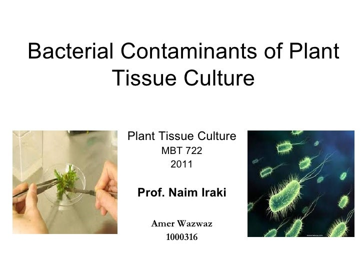 Bacterial Contaminants of Plant         Tissue Culture         Plant Tissue Culture               MBT 722                2...