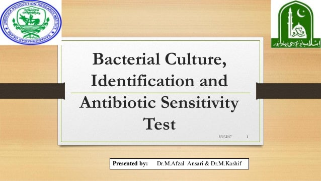 bacterial culture identification pictures to pin on
