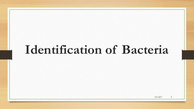 antibiotic sensitivity test procedure pdf