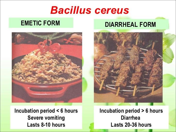 Bacillus Cereus Food Poisoning